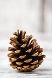 Pine Cones Royalty Free Stock Photos