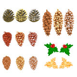 Pine cones natural  and golden pine cones and snow pine cones vector Stock Photos