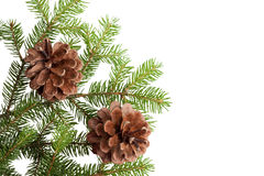 Pine Cones and Needles. Christmas tree and cones, on white Stock Photos