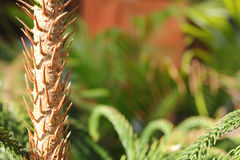 Pine cones and needles, close up Royalty Free Stock Photo