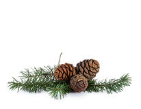 Pine cones and needles royalty free stock photo