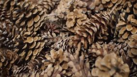 Pine Cones nice and dry and some are open up. Stock Photography