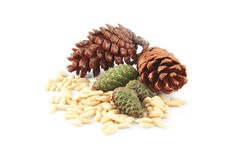 Pine cones and nuts Royalty Free Stock Image