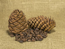 Pine cones and nuts Royalty Free Stock Photo