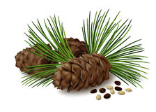 Pine cones with nuts and pine needles on white background Royalty Free Stock Photos