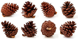 Pine Cones On White Background Royalty Free Stock Photos