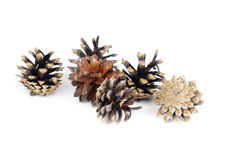 Pine cones over white background Stock Photo