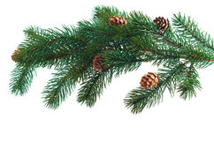 Pine cones with pine branches. Cone and christmas tree isolated white background Stock Photo