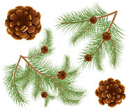 Pine cones with pine needles Royalty Free Stock Images