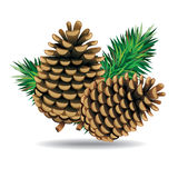 Pine cones with pine needles. Stock Photography