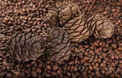 Pine cones and pine nuts Stock Photography