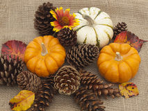 Pine cones and pumpkins on burlap Royalty Free Stock Photos