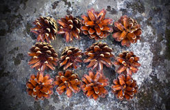 Pine cones on rock Royalty Free Stock Photography