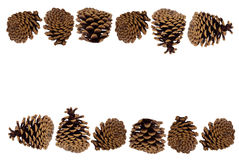 Pine cones in a row; backgrounds, borders Stock Photography