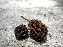 Pine cones on the sands Royalty Free Stock Photos