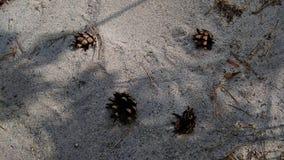 Pine cones on sea sand stock photos