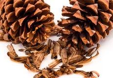 Pine Cones & Seeds Stock Image