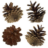 Pine cones set Stock Image
