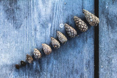 Pine cones. Small to big, interesting pine cones Royalty Free Stock Image