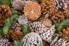 Pine cones with snow chrismas still life. Chrismas background Royalty Free Stock Photo