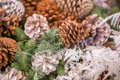 Pine cones with snow chrismas still life. Chrismas background Stock Photos