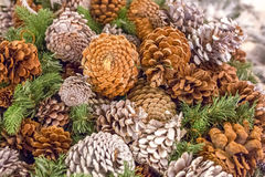 Pine cones with snow chrismas still life. Chrismas background Royalty Free Stock Photos