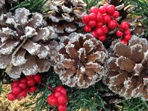 Pine cones with snow and holly berries Royalty Free Stock Image