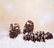 Pine Cones in Snow Royalty Free Stock Image