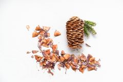Pine cones and spruce twigs for the new year and Christmas Stock Image