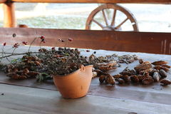 Pine cones on the table. Pine cones and hibiscus lying on the table Royalty Free Stock Image