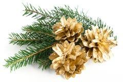 Pine cones Stock Photo