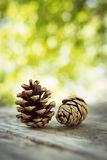 Pine Cones Royalty Free Stock Photo