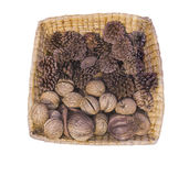 Pine cones and walnuts Royalty Free Stock Images