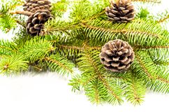 Pine cones on white Royalty Free Stock Images