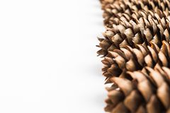 Pine cones on white backdrop with selective focus Royalty Free Stock Photo