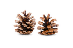 Pine cones on white background. Stock Images
