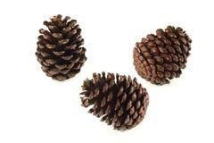 Pine cones Stock Images