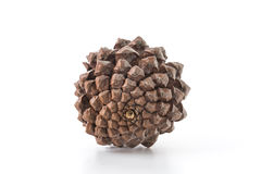Pine cones. On white background Royalty Free Stock Photo
