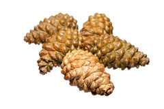 Pine cones on a white background Stock Photography