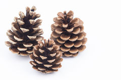 Pine cones on white background. Image shows some pine cones isolated on white stock photo