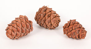 Pine cones on a white background Stock Photos