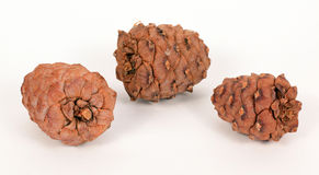 Pine cones on a white background Royalty Free Stock Photography