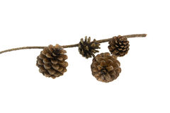 Pine cones on a white background. Stock Photography