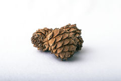 Pine cones on white background naturist. Three bumps brown beautiful ripe royalty free stock photography