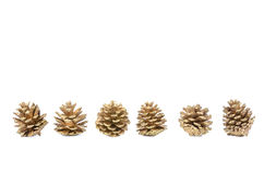 Pine Cones on white isolated background Royalty Free Stock Image