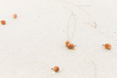 Pine cones on  white sand Stock Photo