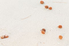 Pine cones on  white sand Royalty Free Stock Photography
