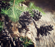 Pine cones on wooden background. Stock Images