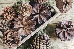 Pine cones Royalty Free Stock Images