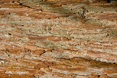 Pine cortex texture Royalty Free Stock Images